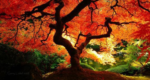 fall_13